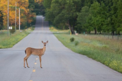 Over the past decade, the number of car accidents involving wildlife in Oregon has reportedly increased by more than 40 percent.